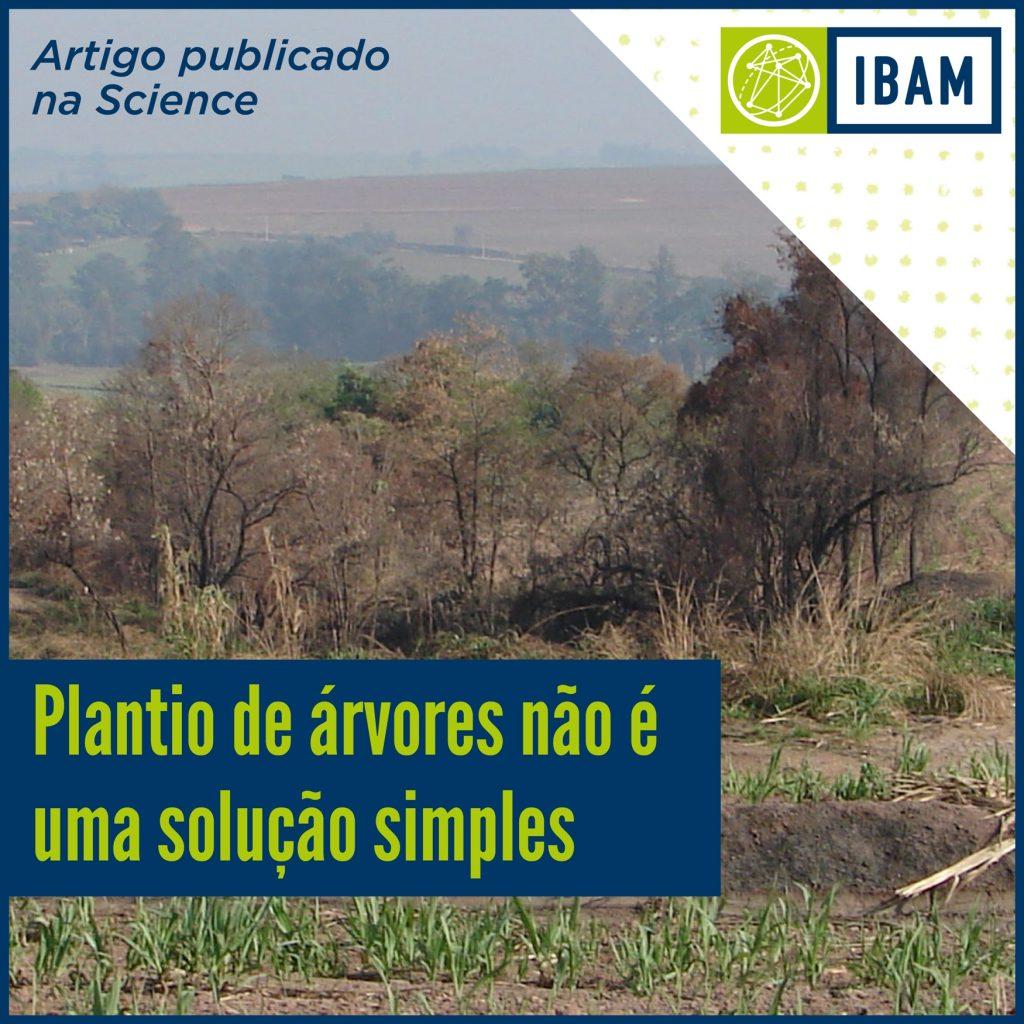 Plantio de árvores não é solução simples - IBAM
